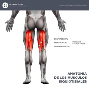 infografia_isquiotibiales